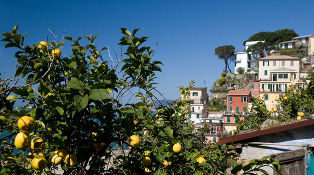Italian-Lemon-Groves
