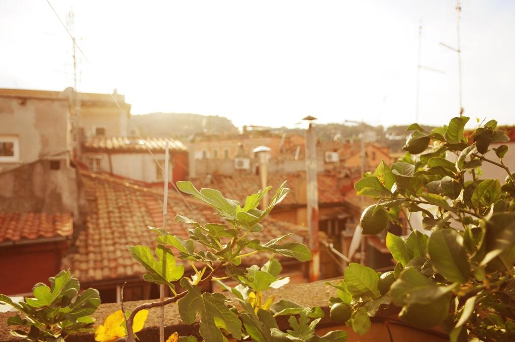 terrace_046