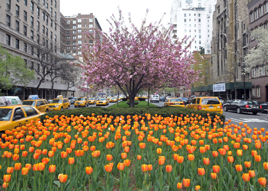 park_ave_tulips2_lg